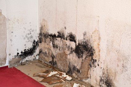 Mold Detection Services by Michigan Fire & Flood Inc